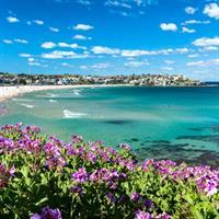 Sydney - Auckland by Air