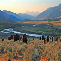 Bozeman and Grand Teton Natl Park via Yellowstone (Self Drive)