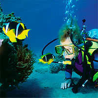 Diving Experience at Turneffe Islands