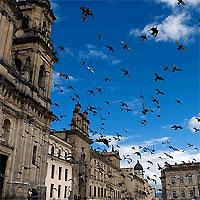 Bogota and Santa Marta by Air