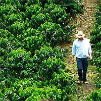 Bogota - Coffee Zone Pereira - Cali
