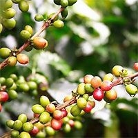 Bogota and The Coffee Zone Pereira