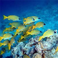 Snorkeling Experience at Turneffe Islands