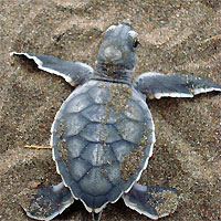 Turtle Nesting Trips