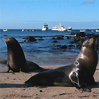 Quito and West Galapagos (MV Galapagos Legend - 4 nights Cruise)