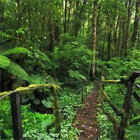 Soberania National Park - Bocas del Toro - Panama City