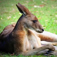 Sydney - Adelaide - Kangaroo Island - Melbourne