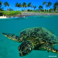 Hawaii Big Island - Kauai  - Maui by Air