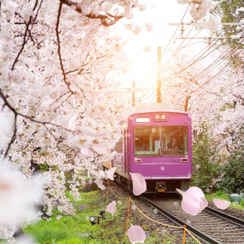 Tokyo - Yokohama -  Kamakura - Kyoto - Osaka - with Rail Pass