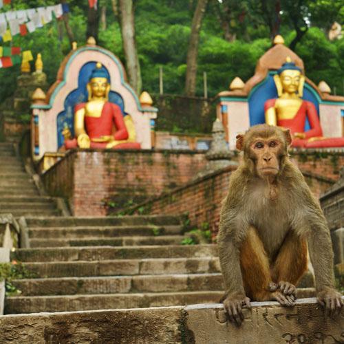 Kathmandu - Pokhara - Kathmandu