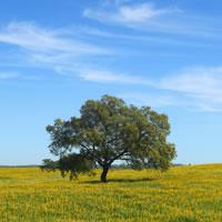 The Charming Alentejo Golden Plains (Self Drive)